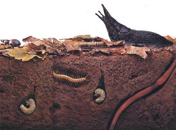earth worms organic farming